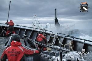 Althammer Studios Mission Seashepherd Schiffe für die Rettung der Ozeane